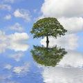 Flood summer Стоковое Изображение RF