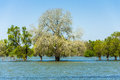 Flood trees danube river flooded forest on water disaster Royalty Free Stock Images