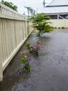 Flooded garden rain on flood water over a in sandgate brisbane Stock Image