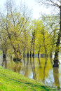 Flooded ground during seasonal high water level Royalty Free Stock Images