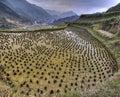 Flooded rice fields in china, Xijiang miao village, Guizhou Prov