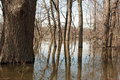Flooded river from the grand during the spring thaw in kent county michigan Royalty Free Stock Photo