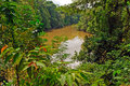 Flooded river during high water in the amazon napo peruvian Royalty Free Stock Image