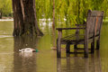 Flooded Riverside Bench Stock Images