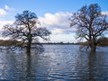 Flooded Winter Farmland Stock Images