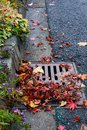 Flooding threat, fall leaves clogging a storm drain on a wet day, street and curb Royalty Free Stock Photo