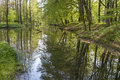 Floodplain forests forest is waterlogged forest with high groundwater Royalty Free Stock Images