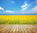 Floor and rape flowers Royalty Free Stock Photo