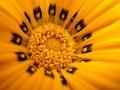 Flor macra amarilla Fotos de archivo