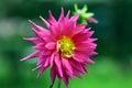 Flora at doi tung royal vill chiang rai province thailand Stock Photography