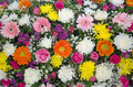 Flora full background mixed of fresh colorful flower bouquet Stock Images