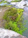 Flora of Karelia