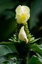 Flora in Parque Historico, cultural and