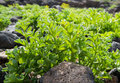 Flora of tenerife canary islands spain Royalty Free Stock Photos