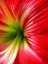 Flora Tubes Royalty Free Stock Photo