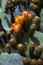 Floración del cactus Imagenes de archivo