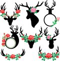 Floral Antlers and Deer Head Elements Royalty Free Stock Photo