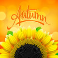 Floral autumn background with sunflower vector eps illustration Stock Images