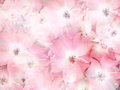 Floral background abstract of wild roses pale pink vintage style Stock Photo