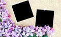 Floral Background with Blank Photos Royalty Free Stock Photography