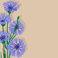 Floral background blue cornflowers Royalty Free Stock Image
