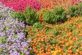 Floral background. Colorful flower bed in city design Royalty Free Stock Photo
