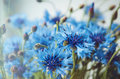Floral background of fresh blue cornflower flowers with soft shine summer blossom concept place for text copy space Stock Image
