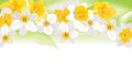 Floral background gentle flower border flowers daffodil texture with flowers vector graphic Stock Photos