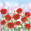 Floral background with red poppies Stock Images