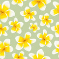 Floral background seamless pattern yellow plumeria Royalty Free Stock Photo