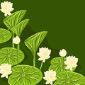 Floral background with water lili vector lotus on green Stock Photos
