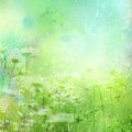 Floral background with watercolor camomile