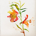 Floral background with watercolor lily Stock Photo
