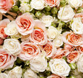 Floral background for your design, roses Royalty Free Stock Photography