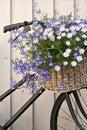 Floral bike Royalty Free Stock Photo