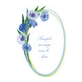 Floral border flower frame cornflower posy oval spring background Royalty Free Stock Images