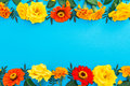 Floral border frame of yellow and red flowers on blue background. Flat lay, top view. Floral background. Royalty Free Stock Photo