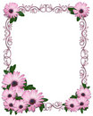 Floral border Purple Daisies Royalty Free Stock Photo