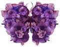 Floral butterfly made dried lily petals pressed Petunia flower Royalty Free Stock Photo