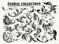 Floral collection Royalty Free Stock Image