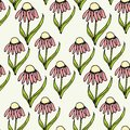 Floral colorful echinacea endless pattern, hand drawn seamless background ink graphic art design elements
