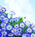 Floral daisy border Royalty Free Stock Photo