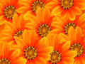 A floral design background with many orange flowers like sunflowers filling the full screen it is good for a background or to Royalty Free Stock Images