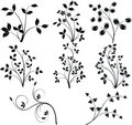 Floral design  elements vector Royalty Free Stock Image