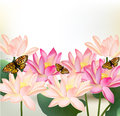 Floral design with vector pink lotus flowers realistic on white background for Royalty Free Stock Photo