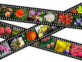 Floral filmstrips illustration Stock Images