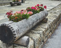 Floral flowerbed in a big log Royalty Free Stock Photo