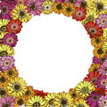 Floral frame of colorfull daisies flowers. Vector illustration. Royalty Free Stock Photo