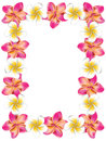 Floral frame made from white and pink plumeria frangipani flowers Stock Photos