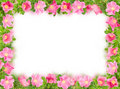 Floral frame with pink briar on white Royalty Free Stock Photo